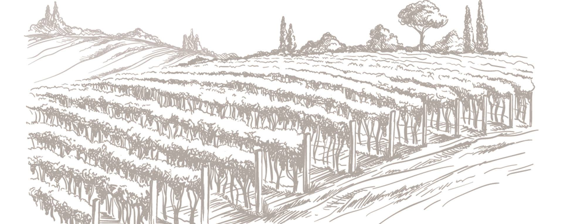 Vinoteca al Chanti